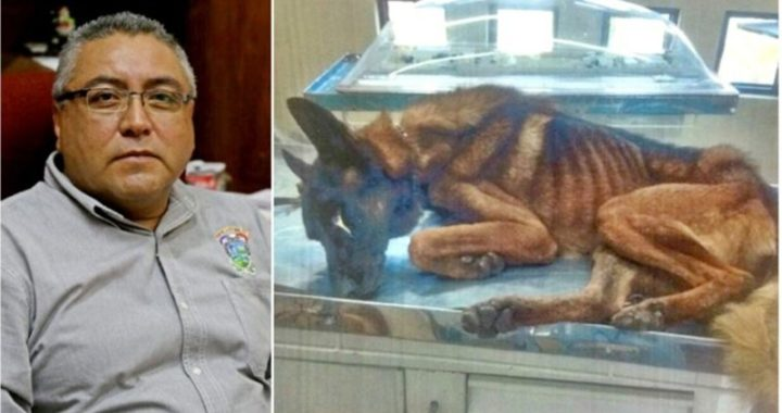 City Treasurer Starved K-9 Police Dogs Because Feeding Them Would Cost Too Much   Animals